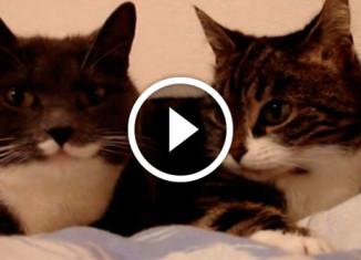 разговор двух котов