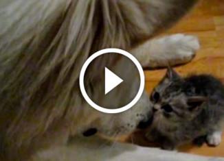 Дружба пса и котенка