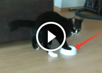 Кот играет с миской