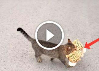 Кот украл игрушку