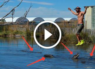 Над болотом с аллигаторами
