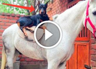 Пес - заклинатель лошадей