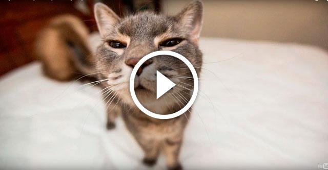 Подборка забавных котов