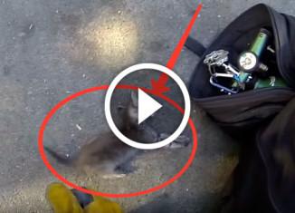 Пожарные спасли котенка