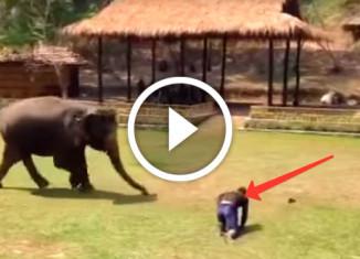 Реакция слона на обиду его смотрителя