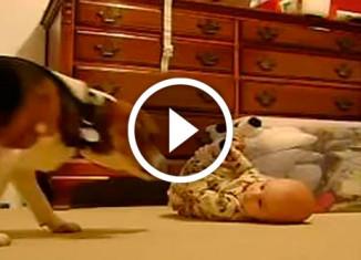 Малыш знакомится с псом