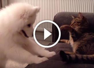 Зарождение дружбы между котом и собакой