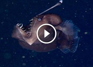 Черный морской дьявол