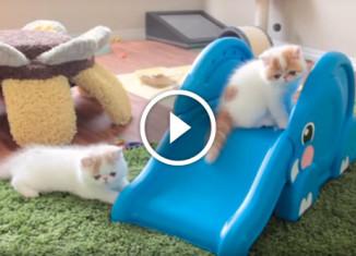 котята катаются на горке