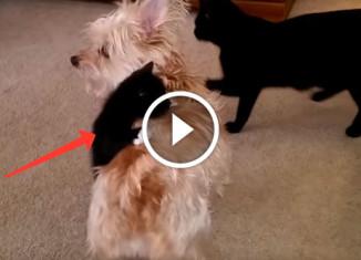 Котенок на собаке