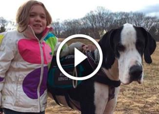 Собака помогает девочке ходить