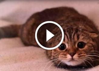 Подборка провинившихся котов