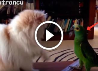 Попугаи достают котов