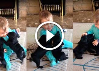 Щенки играют с малышом