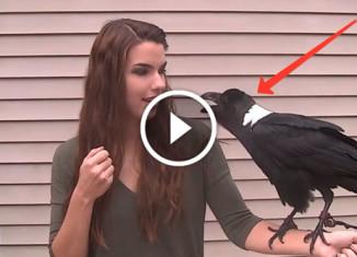 Говорящий ворон