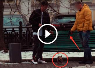 Эксперимент Убить собаку за деньги