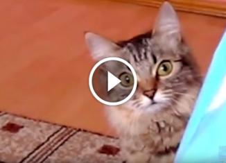 Кот задумал что-то нехорошее