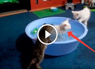 Котенок обожает купаться