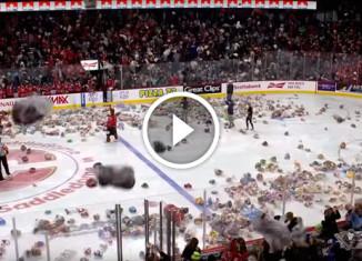 на лед выбросили 28815 плюшевых мишек