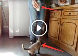Настырный котенок пьет молоко