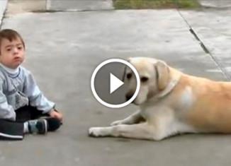Пёс играет с больным мальчиком