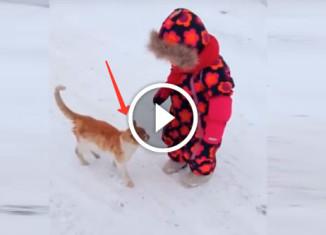 почему нельзя поворачиваться к котам спиной