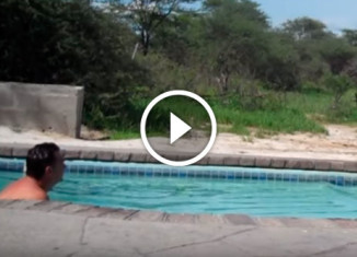 Слон пьёт воду из бассейна