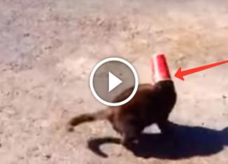 Собака помогла коту снять стакан с головы