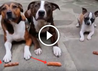 Собаки учатся выдержки