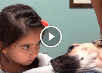 Собаку спасли от голодной смерти