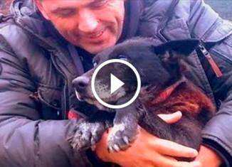 Спасение пса из колодца