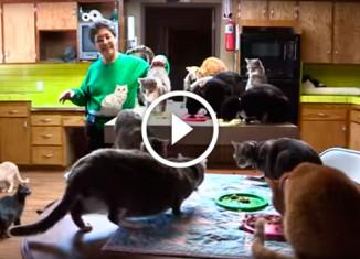 Американка приютила 1100 кошек