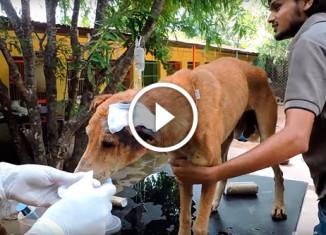 Исцеление собаки