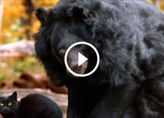 Дружба кота и медведя