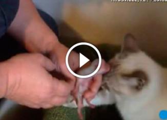 Кошка спасает щенков