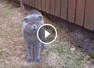 Кот ругается с хозяйкой