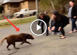 Собака нашла семью