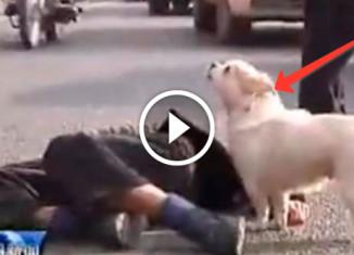 Пес спас своего хозяина