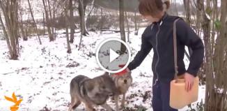 Семья из Белоруссии держит волков