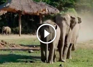 Слоны увидели любимого волонтера
