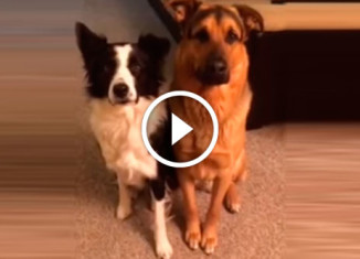 Собаку спросили кто её лучший друг