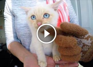 Спасение замёрзшего котёнка