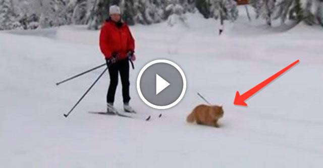Кот катает лыжников