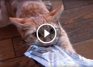 Кот не отдает пакет