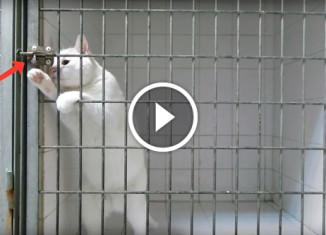 Кот выбрался из клетки