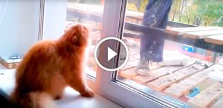 Кот защищает дом