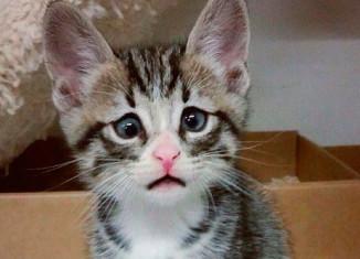 Котенок с грустной мордочкой