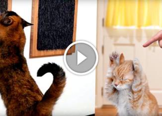 Лайфхаки для владельцев котов