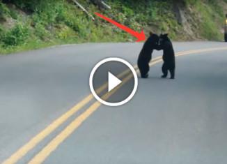 Медвежата играются