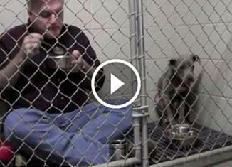 ветеринар позавтракал в клетке с собакой
